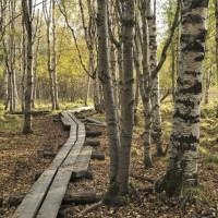 Luonnosta liiketoimintaa ja hyvinvointia -valmennus