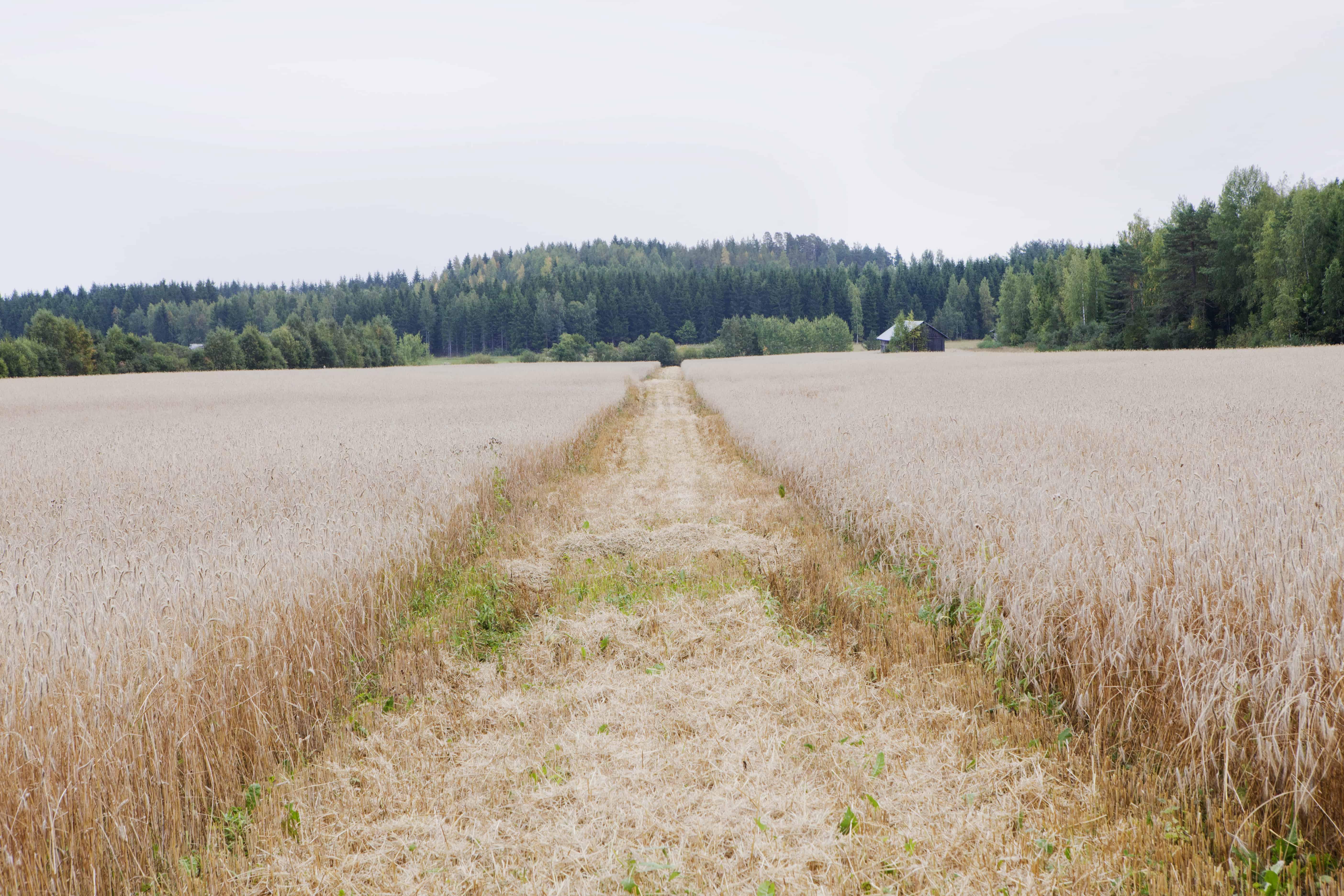 Yrittäjä ja mahdollisuuksien maaseutu