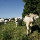 Lehmätaidepaja 25.3.