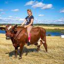 Jos lehmät puhuisivat -valokuvanäyttely