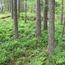 Varsin Hyvän rahoittama Metsäbiotalous kasvuun -hanke tuo uutta tietoa asukkaalle ja metsänomistajalle