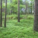 Metsäbiotalouteen liittyviä tilaisuuksia