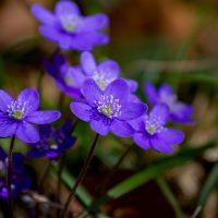Varsin Hyvän kevätkokous 19.5. klo 17