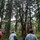 Hyvinvointia metsästä –ilta 10.9. Piikkiössä