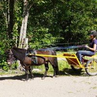 Ponipowerii -hanke poiki Turun seudulle säännöllistä raviponitoimintaa