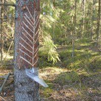 Hyvinvointia metsästä -webinaari