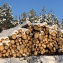 Metsäbiotalouteen tavoitellaan kasvua Leader-hankkeella