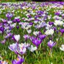 Varsin Hyvä ry:n kevätkokous 5.5. klo 17